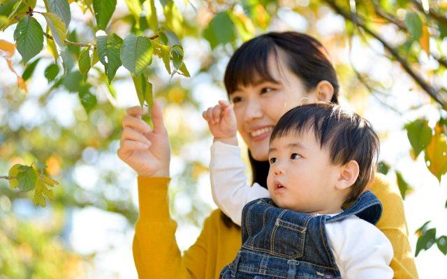 葉っぱを見ている親子