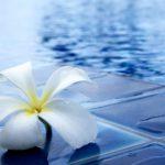 青いプールサイドに映える白いお花